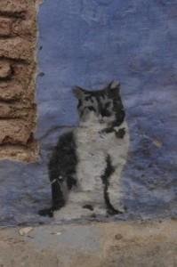 Banksie cat