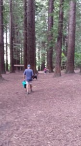 Redwood grove, scattering the dog