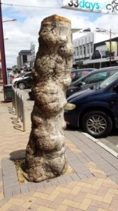 Plane tree stump on Broadway