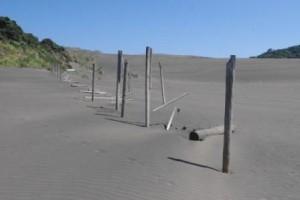 Bethells sand dune