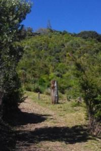 McKenzie Reserve