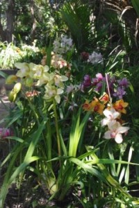 Sacred Blessing Sanctuary Orchids