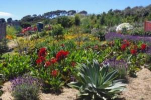 Uma Rapiti herbaceous border