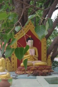 Ananda Buddha and Bodhi tree