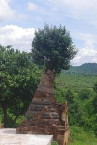 Thriving tree - crumbling stupa