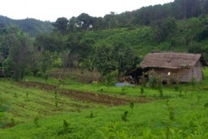 Fields and shack Kalaw