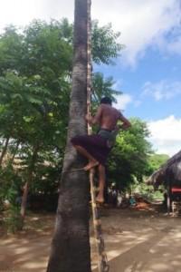Climbing the Palm