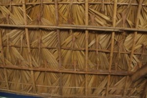 immaculate thatching with Palm leaves