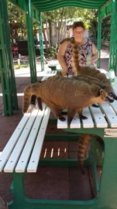 Coati Table Take-over